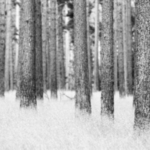skogrim